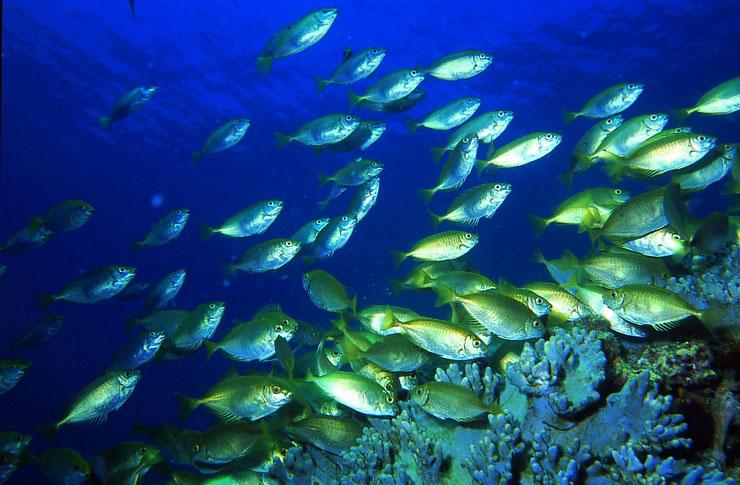 熱帶魚示意圖。