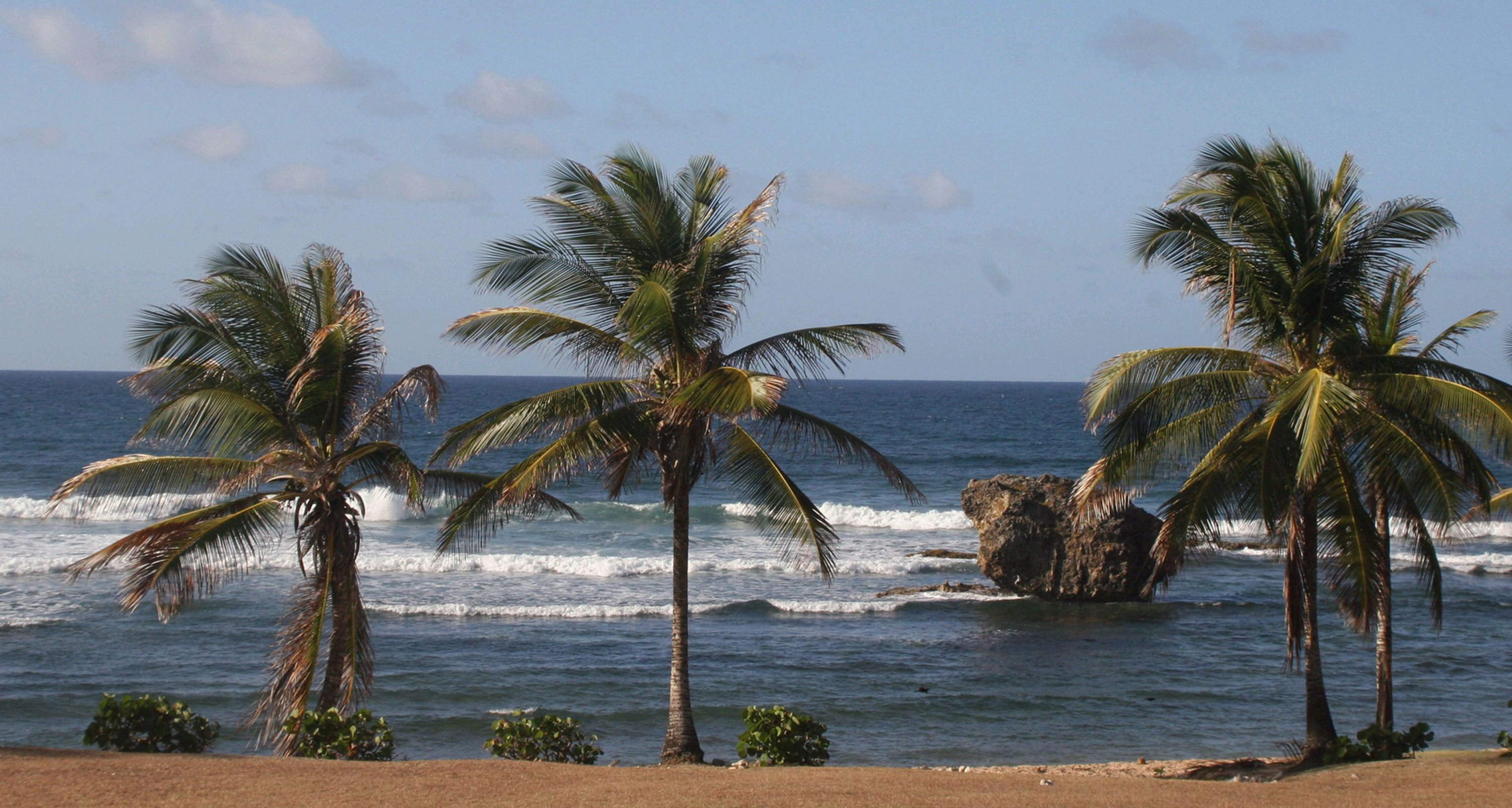 Palm trees line the shore as waves crash over boulders on the East coast of Barbados.