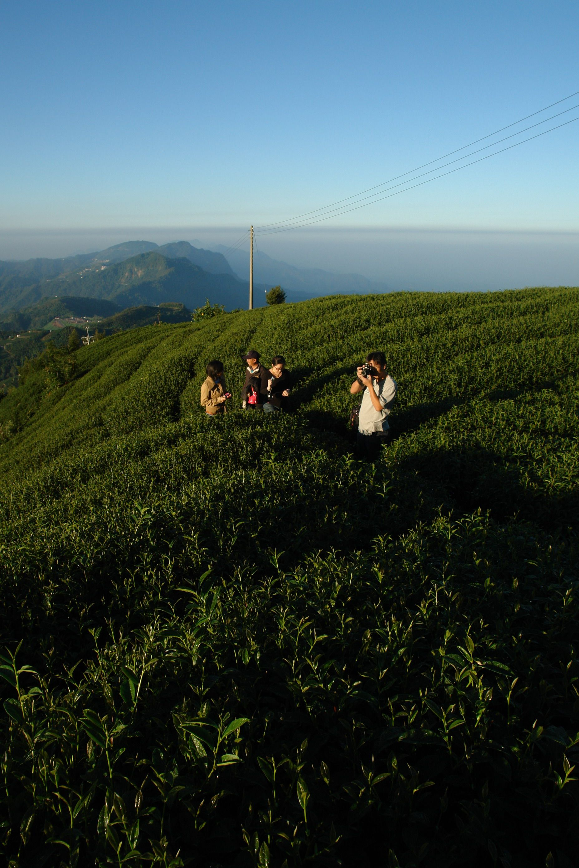Travelers climb to uphill tea gardens to catch the panorama from the top of Top Shihjhou.
