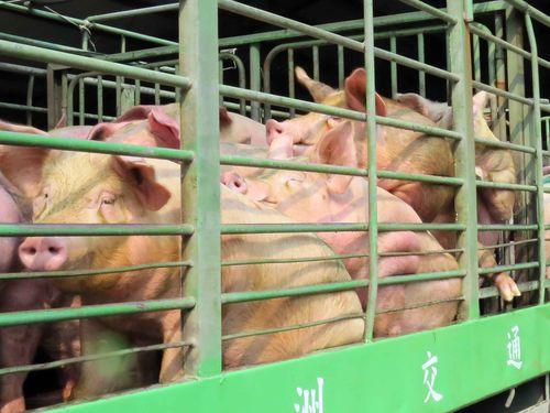 March CPI expected to rise on higher pork prices