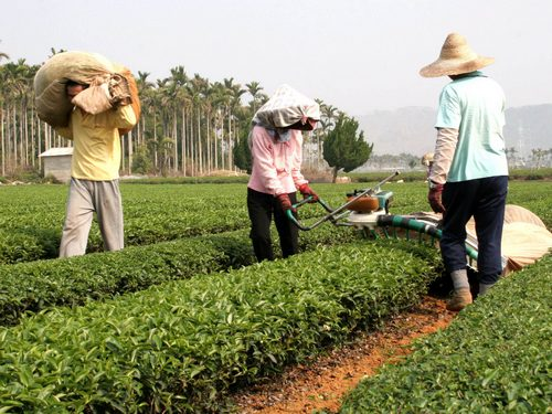 A proposal by Agriculture Minister Chen Bao-ji to try out the importation of agricultural workers is not likely to get off the ground next year as the...