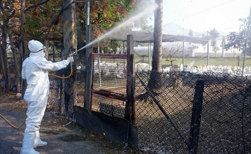 Taiwan confirms goose farm hit by H5N8 avian flu