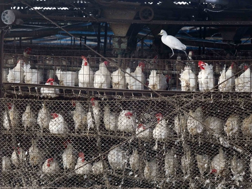 The government is monitoring the possible impact of the latest bird flu outbreaks on the stock market and consumer prices, officials said Monday.  A...