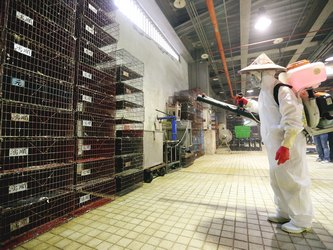 Hong Kong bans eggs from Taiwan in wake of avian flu detection