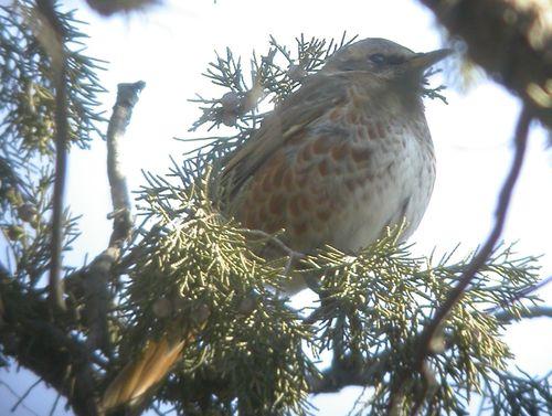 Another migratory bird found infected with bird flu virus H5