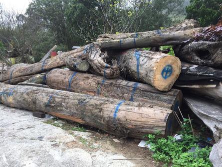 Suspicions raised in 'driftwood' case