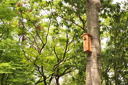 Taipei City's Public Work Department has built 40 cuckoo clock-shaped birdhouses in Daan Forest Park with the aim of adding a touch of nature to the r...