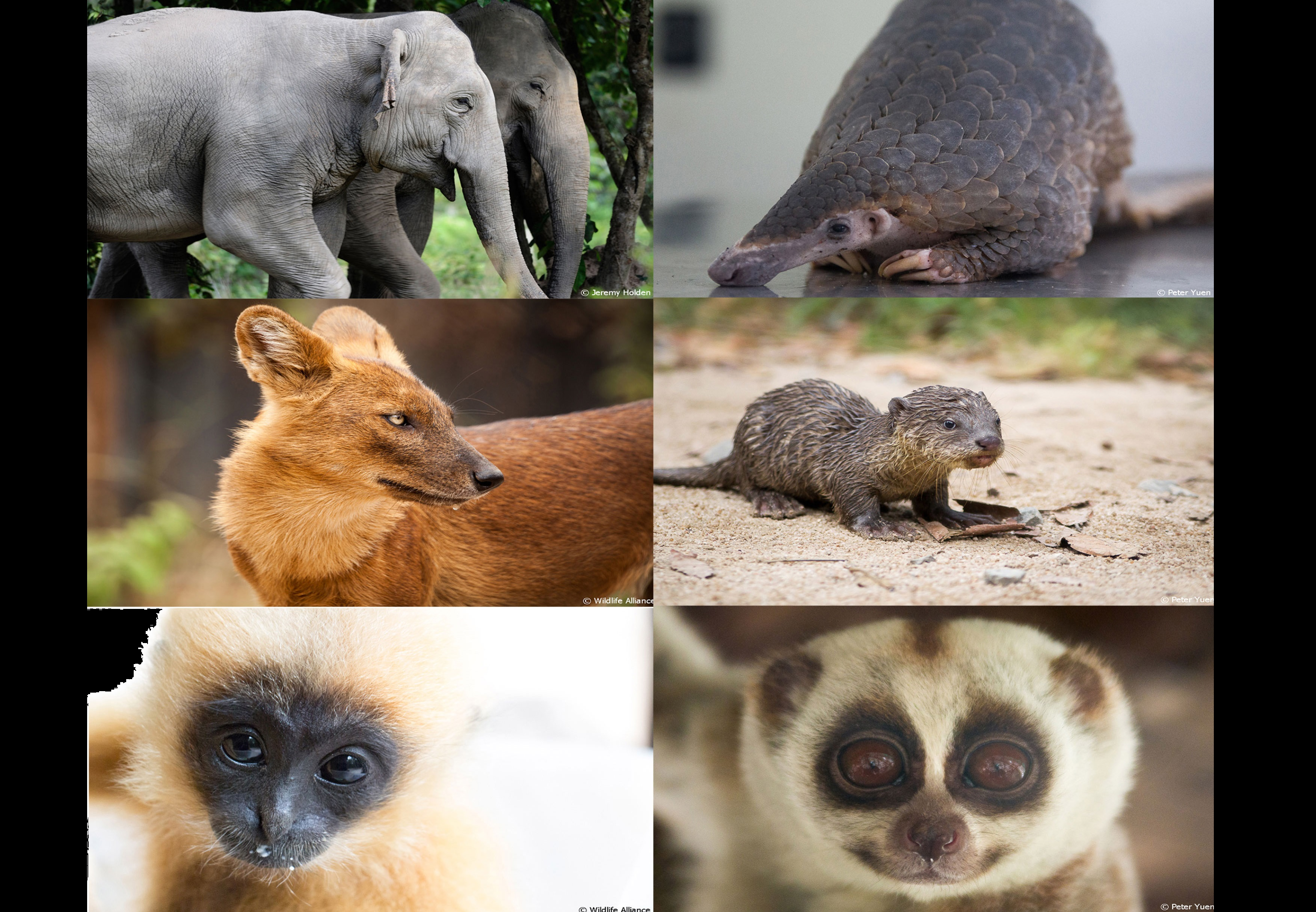 6 animals that need our protection. (Photo courtesy of Peter Yuan, Wildlife Alliance)