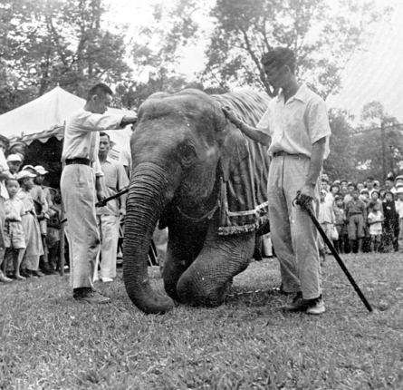 木柵動物園大象馬蘭仍然熬不過病魔的摧折,2002年2月24日上午去世。圖為民國四十四年五月六日圓山動物園舉行動物慰靈祭,由馬蘭代表全園動物...