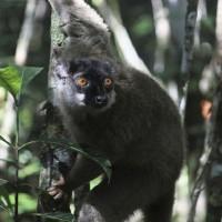 UN重磅生物多樣性報告 百萬物種面臨滅絕危機