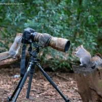 「2019搞笑野生動物攝影獎」開始收件嘍 新作品先睹為快