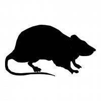 Hong Kong man with rat Hepatitis E traveled to Taiwan
