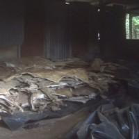 阿膠藥材需求增 非洲驢子被殘暴斷魂因應市場需求