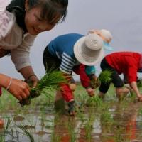 北韓婦女在中國淪為性奴 NGO籲各國重視