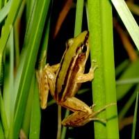 響應國際生物多樣性日 新北市持續原生物種復育