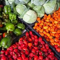 農糧署「新南向市場業界拓銷計畫說明會」即日起開放報名
