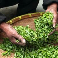 北市茶葉檢出農藥殘留超標 德記、少帥禪園皆中標