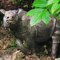 急需保育!馬來西亞極危雄性蘇門答臘犀牛離世 野外族群下降中