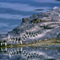 歐洲破獲上千隻爬蟲類動物 險些淪為高級皮件製品
