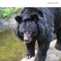 CNN報導台灣黑熊保育 「牠們比貓熊更珍貴」