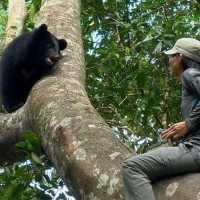 Plight of Taiwan's rare Formosan black bear covered by CNN