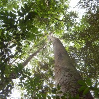 保護森林資源 斯里蘭卡大刀闊斧關閉伐木場