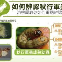 【整理包】蟲蟲危機! 一窺秋行軍蟲的危害與特徵