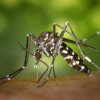 Taiwan concerned about expansion of Japanese encephalitis