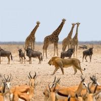 乾旱籠罩動物天堂 非洲納米比亞擬售千隻動物救保育