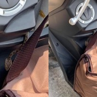 Highly venomous Taiwan habu slithers onto deliveryman's scooter in New Taipei