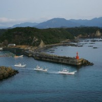 G20 leaders urged to put pressure on Japan over resumed commercial whaling