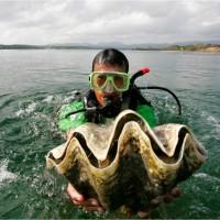 南韓女星濫捕瀕危巨蚌 遭泰國控告恐判刑4年