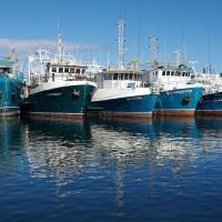 加入南印度洋漁業協定 外交部:我國實力獲國際肯定