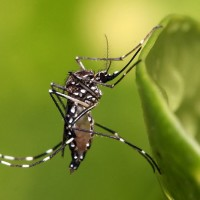 Philippines issues national alert against dengue threat