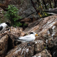 Rare bird spotted on Taiwan's Matsu Islands
