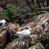 Rare bird spotted on Taiwan's Matsu Islands