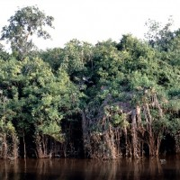 亞馬遜砍伐面積大增 巴西與歐盟貿易協定陷危機