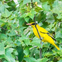Taiwan's Investigation Bureau gets new mission: protect endangered birds