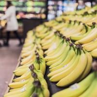 農委會與日本笠間市簽約 每年出口18噸香蕉做學童午餐水果