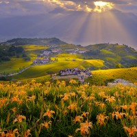 Daylily Festival in Taiwan's Hualien to begin Aug 3