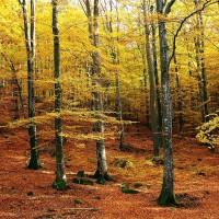 【生態越界日提前到來】地球一年的天然資源量 人類只花7個月就用完