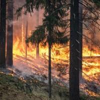 北極圈接二連三「前所未聞」森林大火 燒出5千萬噸二氧化碳