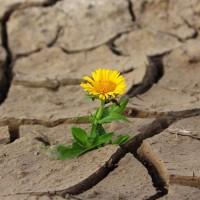 缺水末日浩劫 全球1/4人口求水若渴
