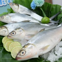 Visitors to Taiwan invited to sample island's milkfish