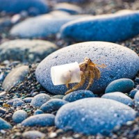Hermit crab spotted traveling with 'plastic shell' on Taiwan beach