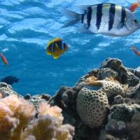 法屬圭亞那    海底有生物多樣性綠洲