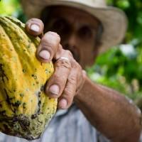 簡又新專欄 – 氣候變遷造成咖啡的欠收 使咖啡農收入不佳