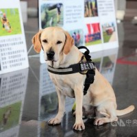 Taiwan earthquake hero dog off to world rescue championship