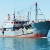 Chinese fishing fleet catches yellow fish in Taiwan territorial waters