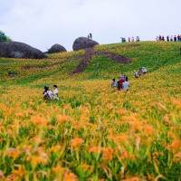Daylilies to remain in bloom in eastern Taiwan through Double Ten Day